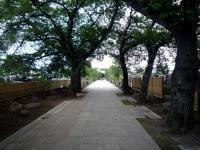 普済寺参道