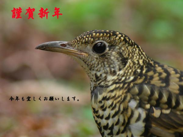 toratugumi_gasho.jpg
