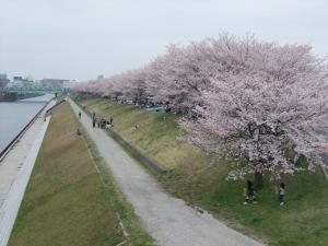 20100404_Sakura1.jpg