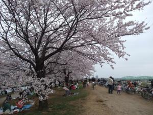 20100404_Sakura2.jpg