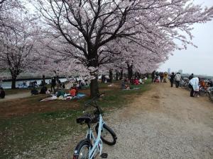 20100404_Sakura3.jpg
