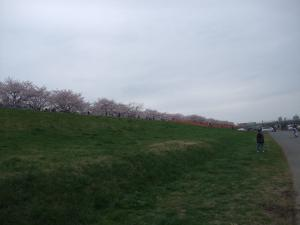 20100404_Sakura6.jpg