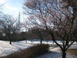 梅園公園初雪