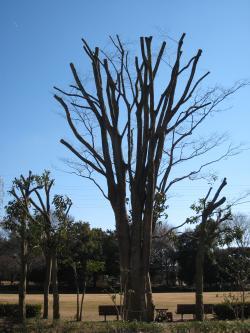 梅園公園樹木