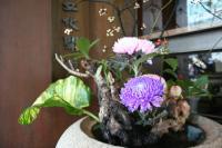 きれいなお花。あちこちにいけてあったよ。