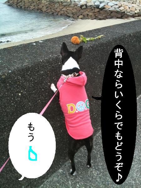 本日の散歩2