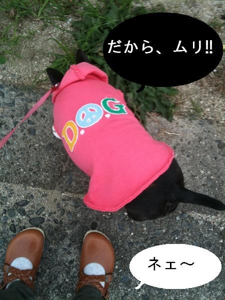 本日の散歩3