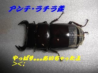 アンテ・ラチラB-1