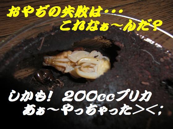 CIMG1169-1.jpg