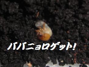 CIMG1370.jpg