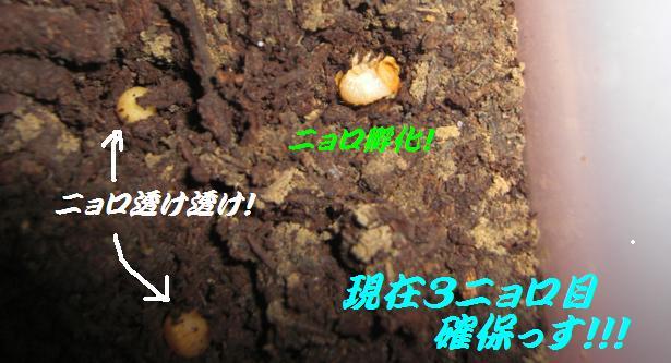 CIMG1469-1.jpg