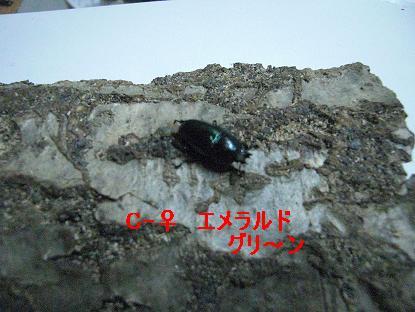CIMG4526.jpg