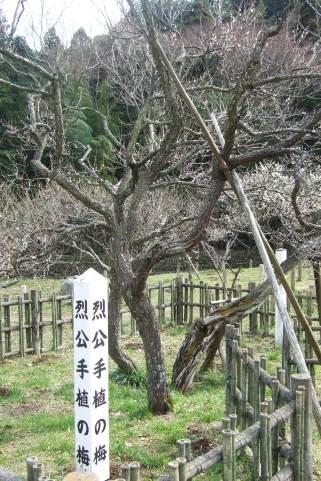 斉昭公手植の梅