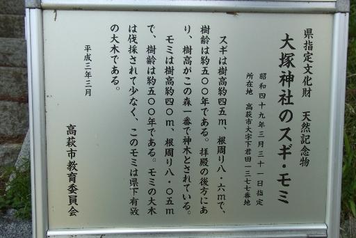 大塚神社のスギとモミの案内