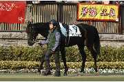 ランフォルセ2010年2月20日 東京1000万下 6着