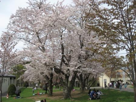 桜:動物園