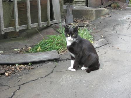 夕張の野良猫・2