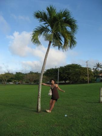 椰子の木と