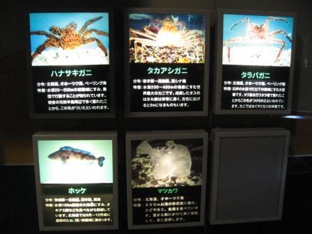 生簀?の魚の種類