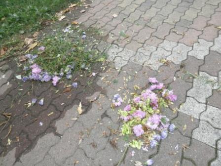 花、花、花...。