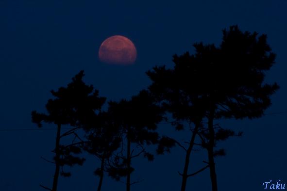 松と月_2