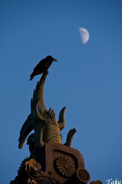 東御苑と月