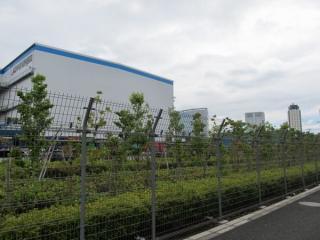 燻蒸倉庫の跡地はトレーラーの駐車場になっている。