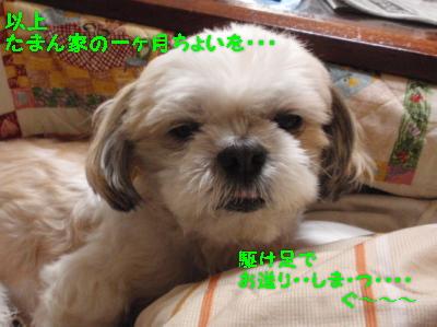 P3251308.jpg