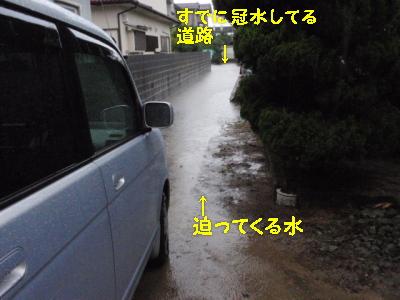 P9030787.jpg