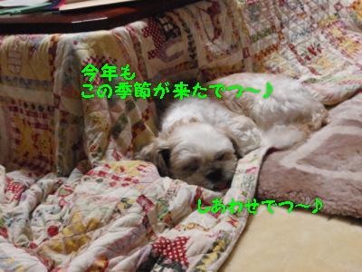 PA260808.jpg