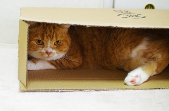 新しい箱これもいいかも3242::
