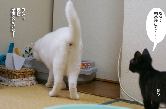 怖がるはちくん34@ピー