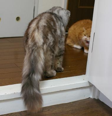 まず廊下で対面したけど取りやめ