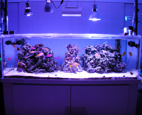 20091125fish180.jpg