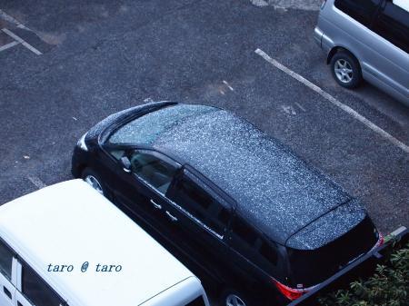 雪とタロー3