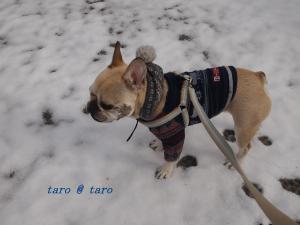 雪の中のお散歩2