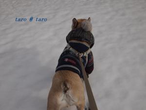 雪の中のお散歩3