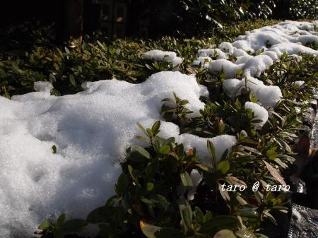 雪の中のお散歩9