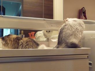 洗面台のお二人