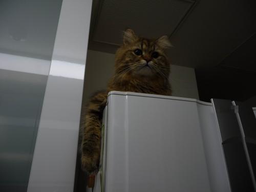 冷蔵庫マイケル
