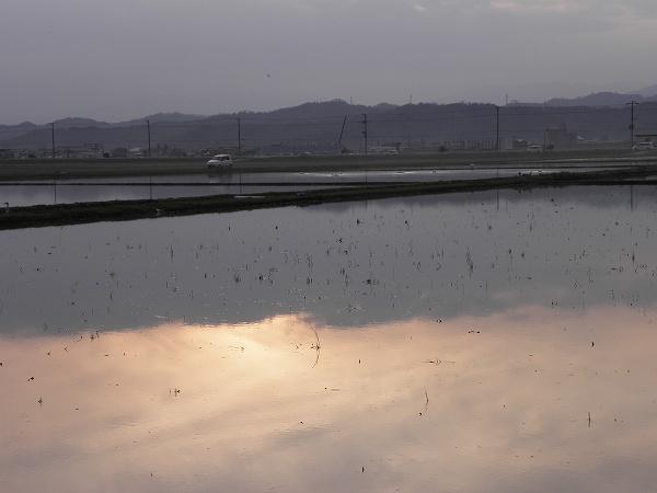 田に写る夕日