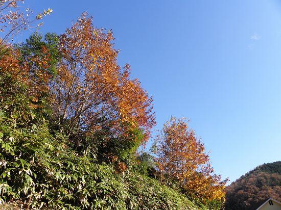 散歩道中と今日の空