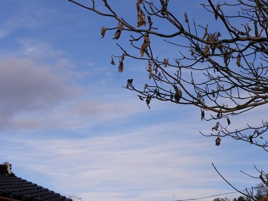 穏やかな雲が広がる今日の空