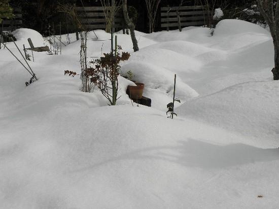 まだ花は雪の下