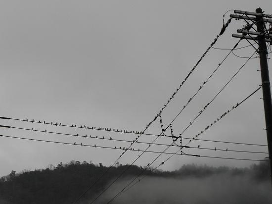 鳥と今日の空