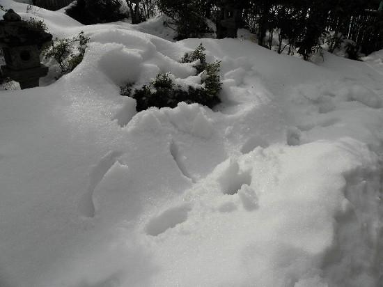 まだ花は深い雪の下
