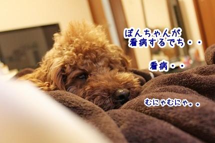IMG_0055_20120131103143.jpg