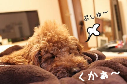 IMG_0057_20120131103143.jpg