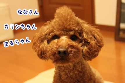 IMG_0230_20120214214952.jpg