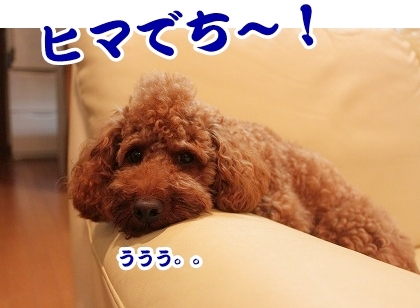IMG_1055.jpg